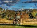 Windmill & Tank near Cowra 001