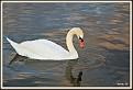 Balboa Swan