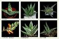1 Aloe (2)