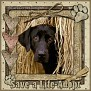 dcd-Save a Life-Adopt-In The Hay-MC