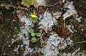 Garden 2012 October 27 Hail (4)
