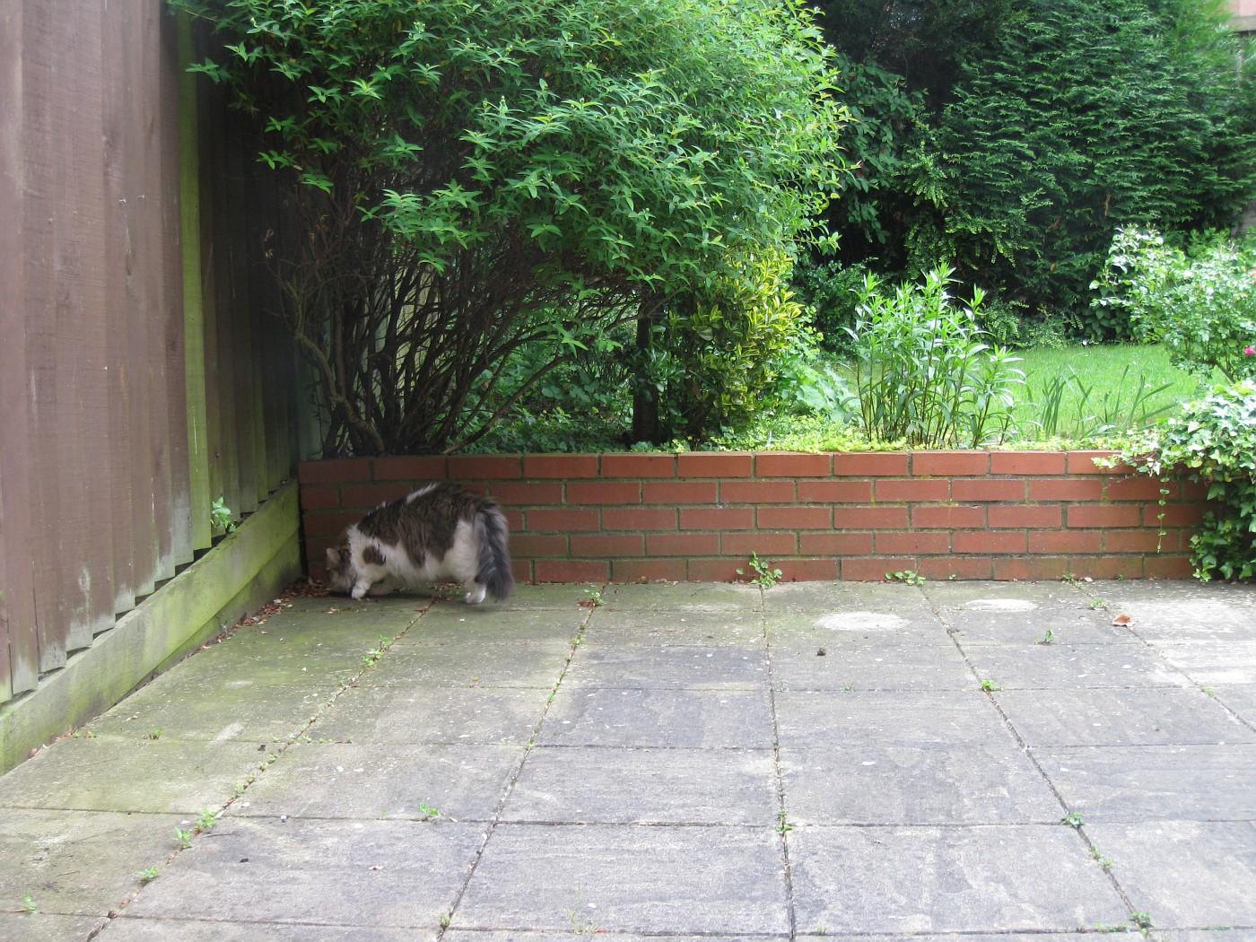 Kesha in th garden