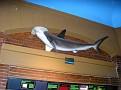 2007 Toledo Zoo 085