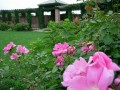 gardens 069