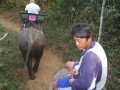 Mae Ping Elephant Camp near Chiang Mai in Northern Thailand Day 12 Feb 23-2006 (24)