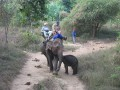 Nursing Baby Elephant...  They had to stop for a little snack!!!