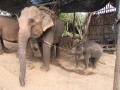 Mae Ping Elephant Camp near Chiang Mai in Northern Thailand Day 12 Feb 23-2006 (62)