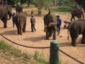 Mae Ping Elephant Camp near Chiang Mai in Northern Thailand Day 12 Feb 23-2006 (84)