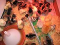 Here is a temporary setting for the chicks.  Food, Water, and heatlamp.
