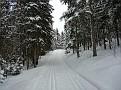 2011 02 21 01 Cross country skiing