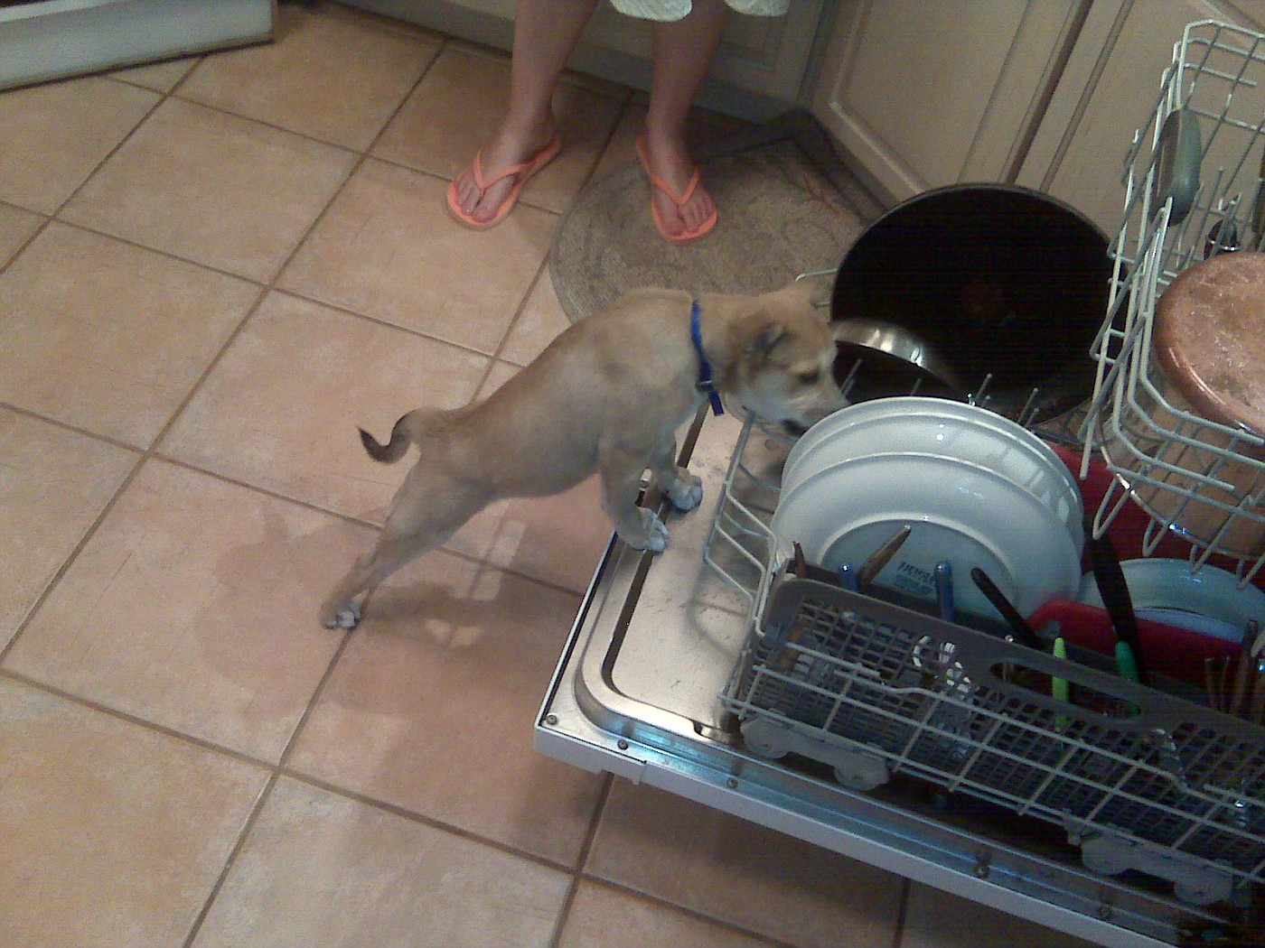 rusty dishwasher