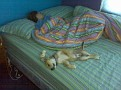 rusty manda sleep7-8