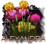 Alexandra - 3094