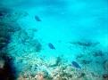 fish at the Nippur's reef
