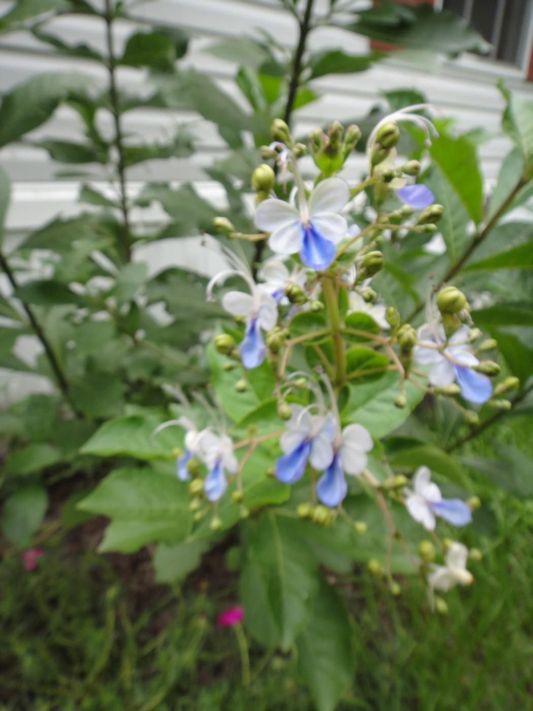 flowers 388.JPG