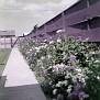 Flowers in Munns' backyard, Rusk Street, Amarillo, Texas, 1955