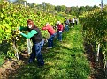 Grape Picking at Natali's Vineyard 10-21-09 (12)