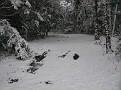 Snow Storm of December 19 2009 (13)