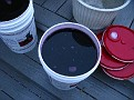 Spring Wine Making 2010 / Getting ready for transfer...