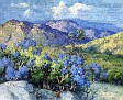 Mountain Lilac - Palomar [c.1920]