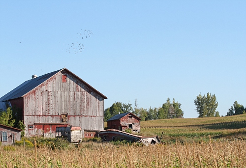 Red Barn and Buildings #4