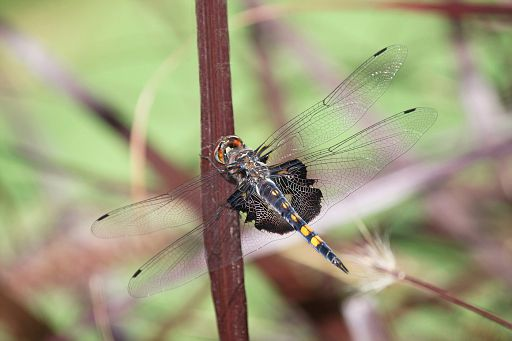Black Saddlebags 2016 #12