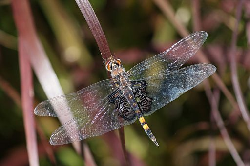 Black Saddlebags 2016 #13