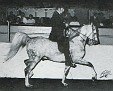 SUR-ALL #26824 (Sureyn x Jubila, by Jubilo) 1963-1984 grey stallion bred by Jedel Arabian Ranch; sired 49 registered purebreds
