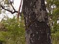 Tree Climbing Snake