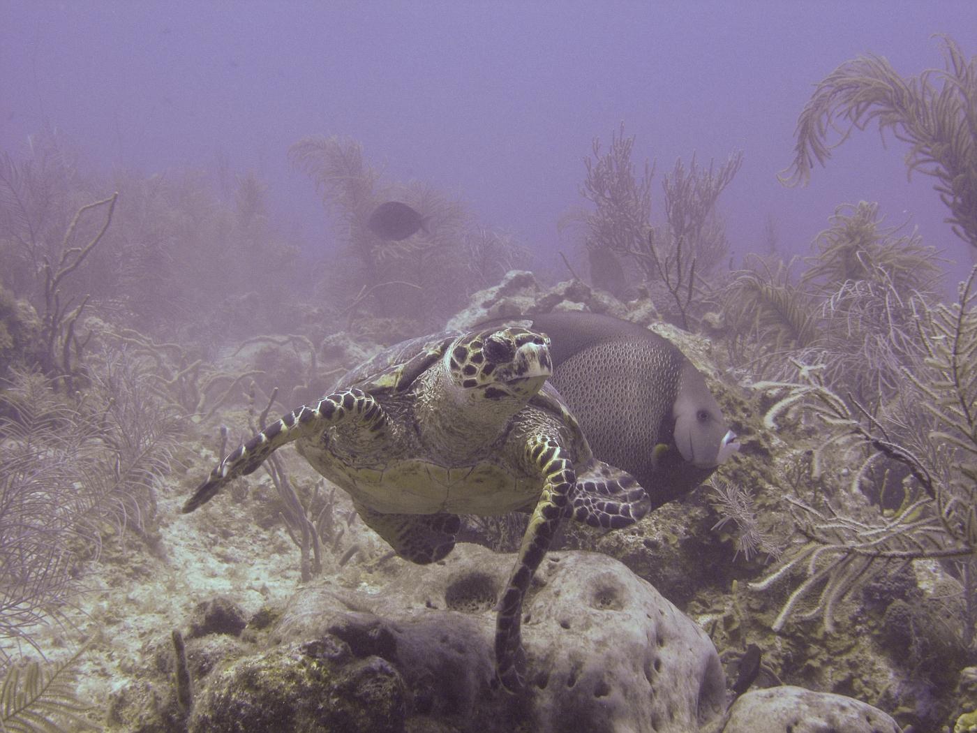 Grand_Cayman-37.jpg