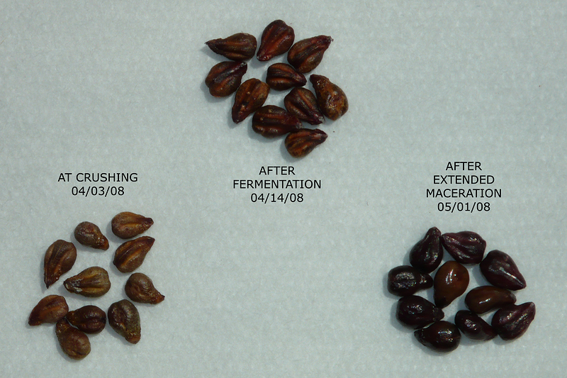 Syrah seeds at different times in the ferment