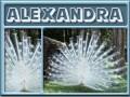 alexandra-gailz0304-albino peacock.jpg