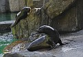 Прага Зоопарк Zoo Prag _DSC8927 210 3