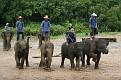 Mae Taeng Elephant Park Show (4)