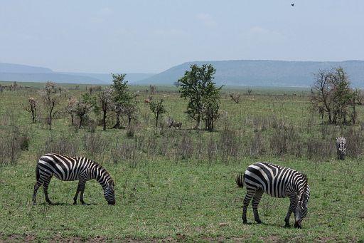 Tanzania 117.jpg