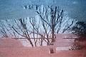 19890200-tree puddle 2c.jpg