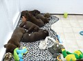 March 21 2012 Callie pups (12)