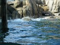 2007 Toledo Zoo 008