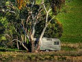 Brewongle Road van in a paddock