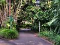 Brisbane Botanic Gardens 010