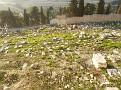 15 06 Gethsemane (4)