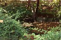1993 Bronx Zoo 14583