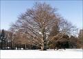 favorite tree at East Rock Park base