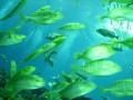ga-aquarium 036