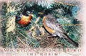 03- MI State Bird