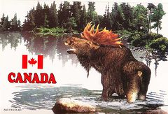 Canada - MOOSE NA