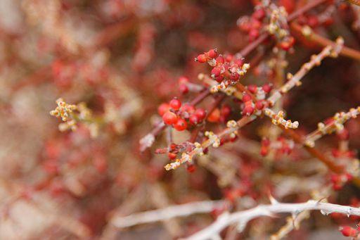 blooming in December