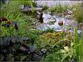 DSCN1553 Plantedammen 05 08 12