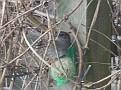 Hungry birdie, January 2010