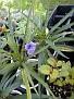 Plants Names DX7 160